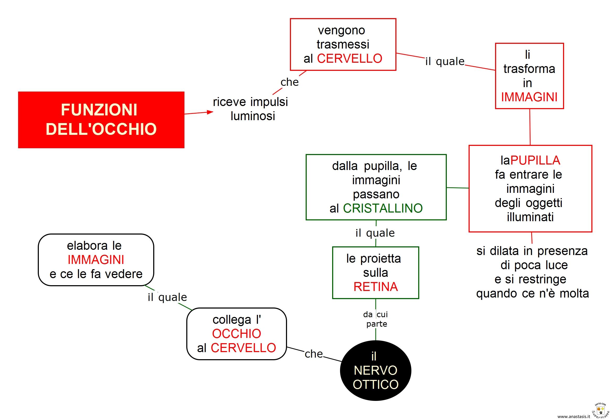 FUNZIONI  DELL'OCCHIO