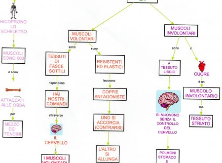 Mappa scienze: Sistema muscolare