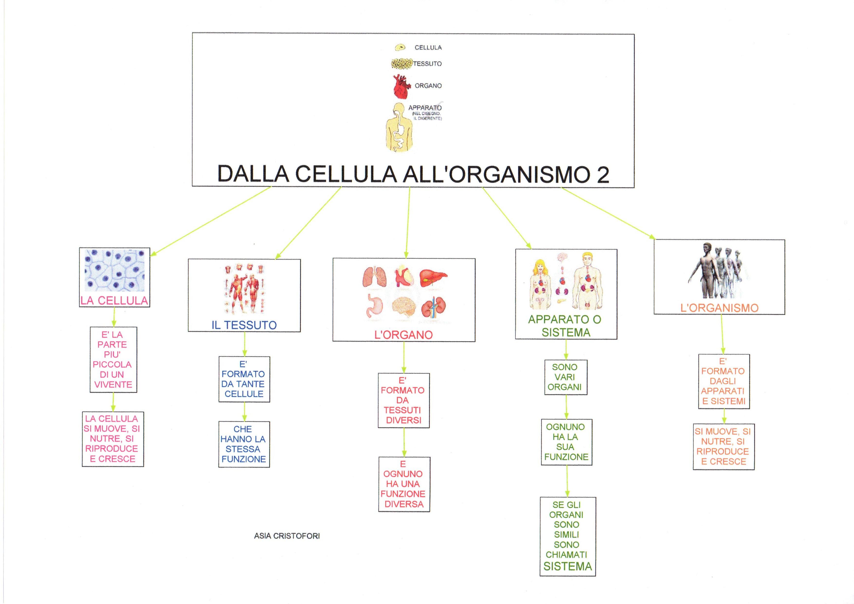 Connu Mappe scienze: Dalla Cellula all'organismo | Dislessia Discalculia  QX65